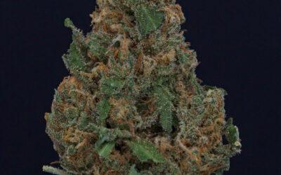 Cannabis 1A 18/1 (White Widow)